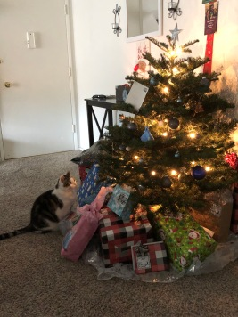 My first Christmas tree in LA. It was a beautiful surprise. Camo loved it too.